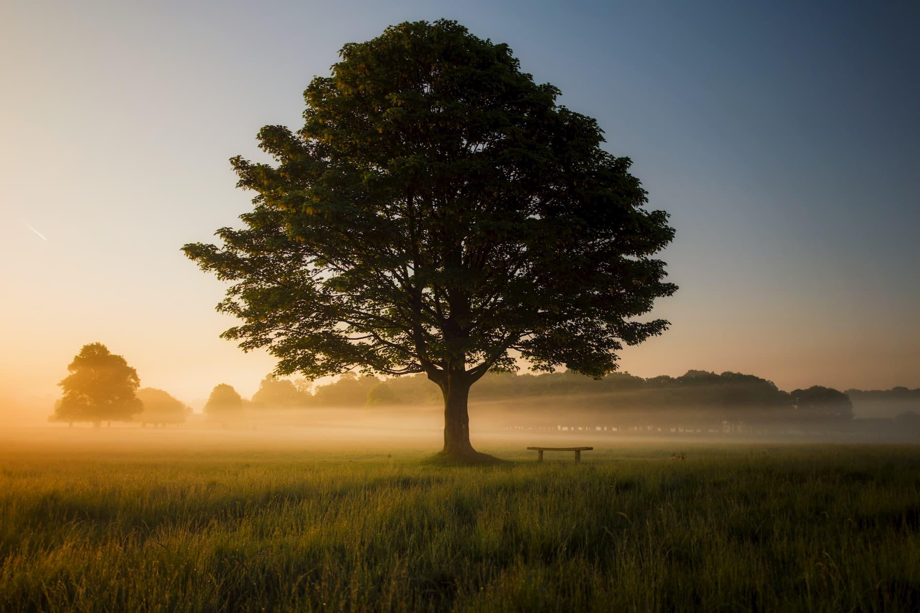 Meditación y desenvolvimiento
