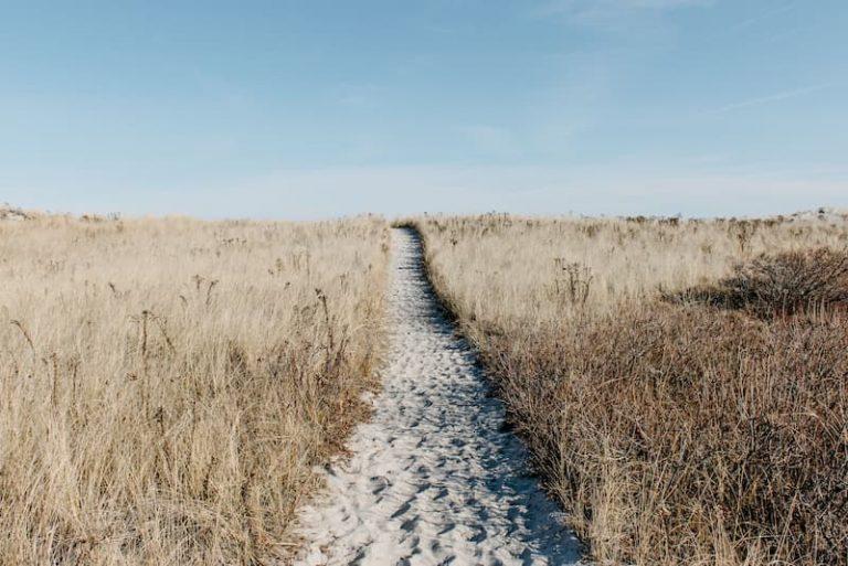Imagen de El camino hacia sÍ mismo